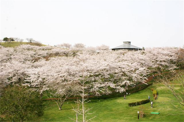04 加護坊山の桜-1