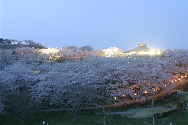 06 加護坊山の桜-3